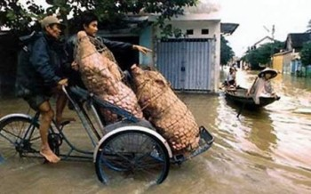 Improvised Transport