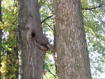 Scandalous Trees