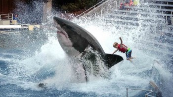Sea World To Discontinue Great White Shark Ride