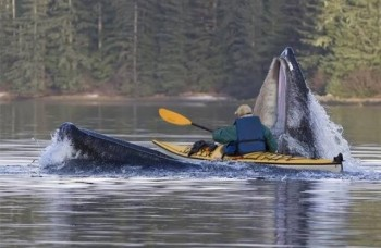 Kayaking in Alaska When Suddenly...