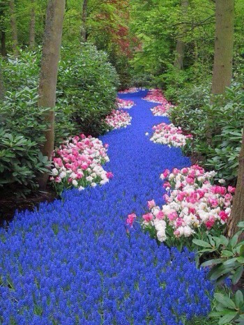 River of Flowers, Netherlands