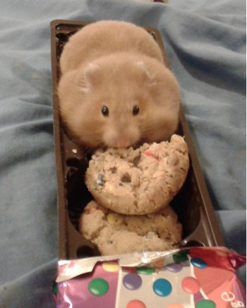 I fits and sits... and eats