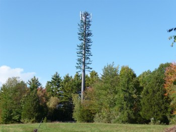 """Yeah so we just disguise it as a tree. It'll blend in perfectly and no one will even know it's a cell tower."""