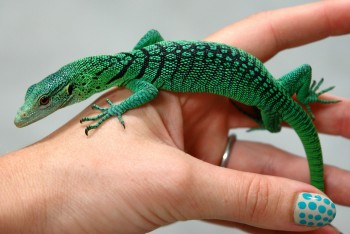 Baby Green Tree Monitor