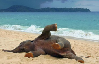 Baby elephant's first time at the beach