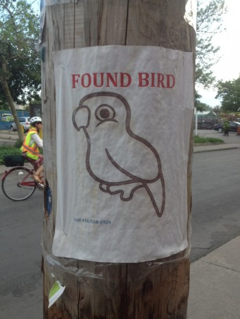 I'm pretty sure they're getting a lot of calls about this bird