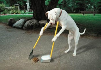 Dog Cleans Up His Own Poop
